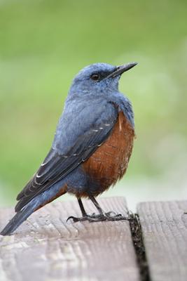 鳥写2 - 最近出会った鳥とその研究